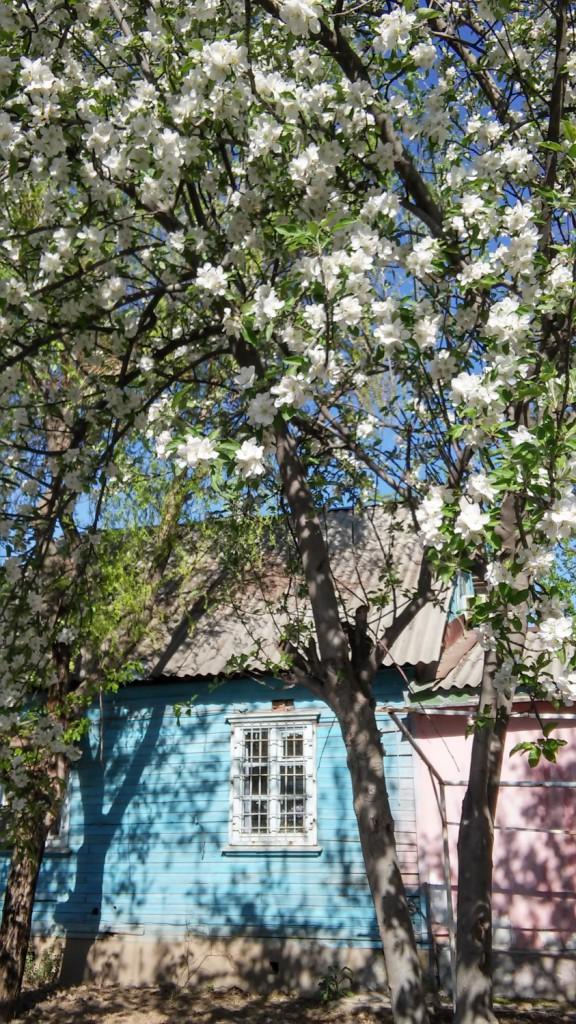 Kevättä Tajikhydrometin pihassa. Kuva: Saija Vuola, SYKE